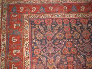 Antique Kurd Bidjar 89 x105 Collectors Rug B 7979