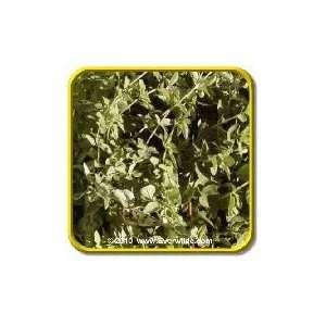 Lb   Vulgare Oregano   Bulk Herb Seeds Patio, Lawn & Garden